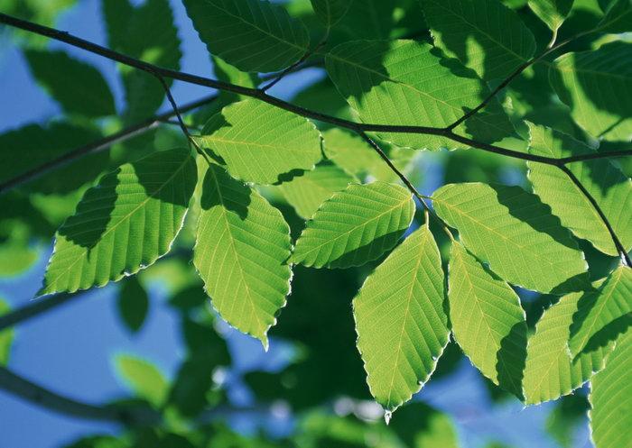 树枝树叶图片-素彩图片大全