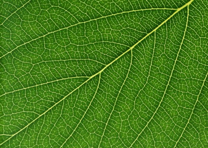 叶子纹理图片,叶子纹理,树叶,植物,2950x2094像素