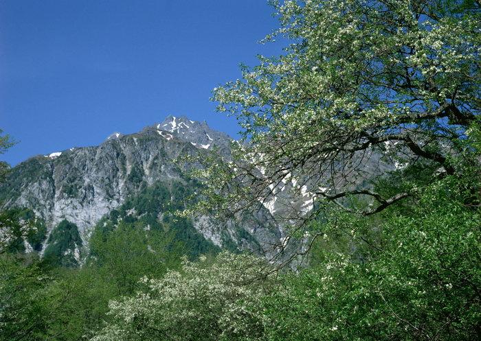 山下樹林圖片,山下樹林,自然風景,攝影,風景,2950x2094像素