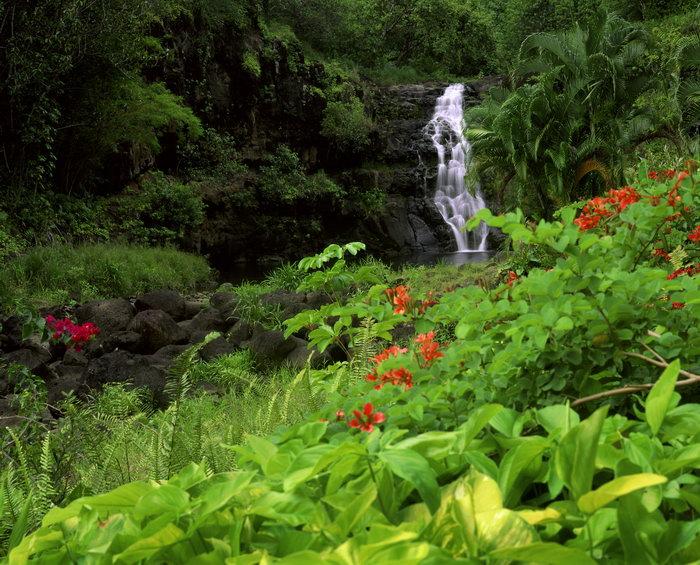 山谷瀑布花草图片,晰山谷瀑布,花草,自然风景,摄影,山水景观,3921x316