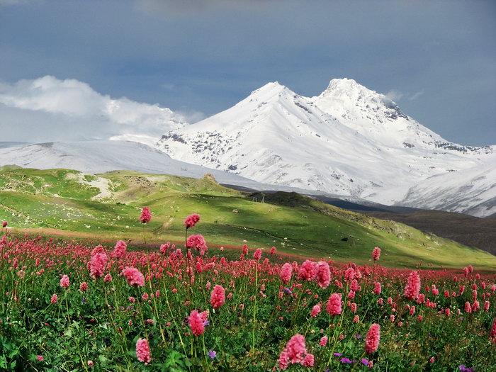 花草植物,雪山图片,花草植物,雪山,自然风景,摄影,山水景观,2310x1733