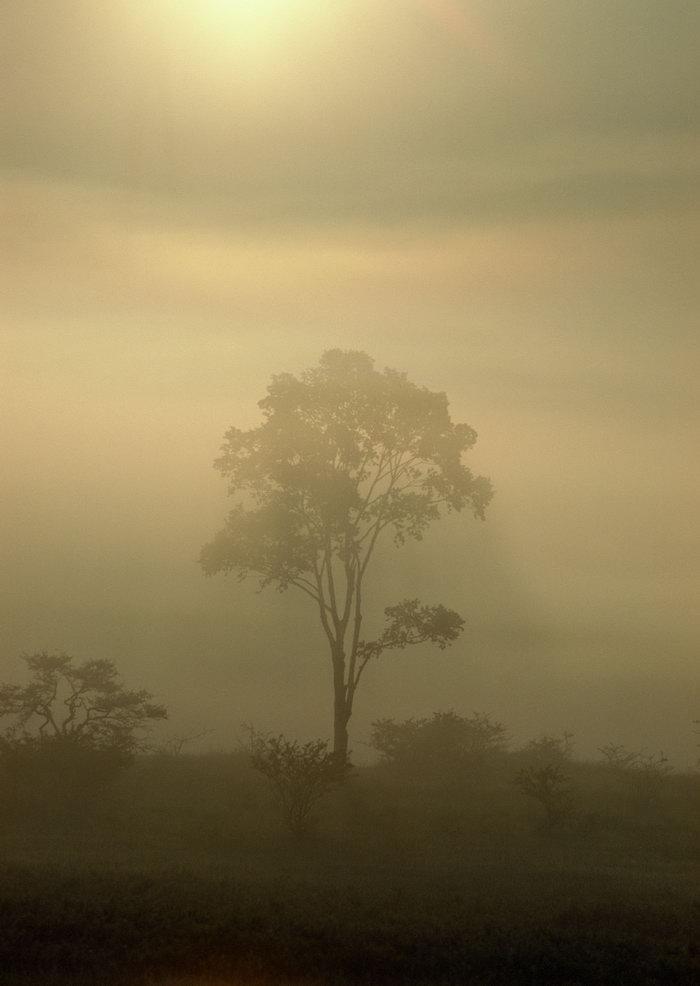 树木阳光晨雾图片,树木,阳光,晨雾,自然风景,山水景观,2950x2094像素
