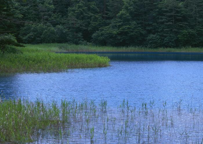 河流溪水草山林图片,河流,溪水,草,山林,山林,自然风景,山水景观,2950