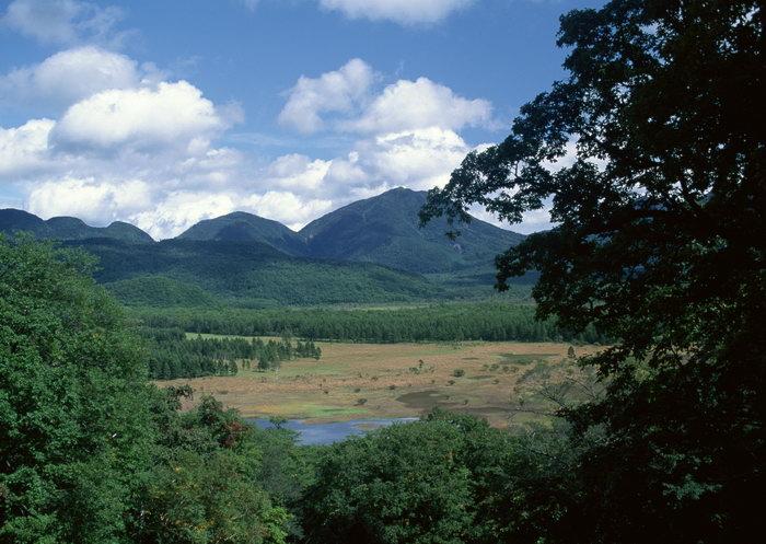 山蓝天白云树林图片