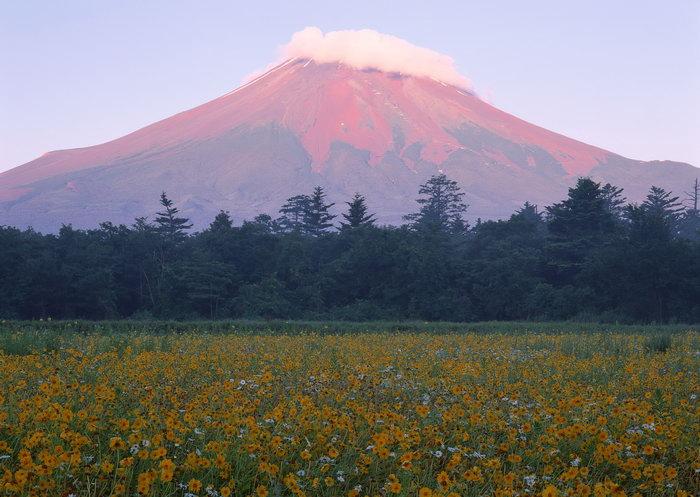 富士山花草图片,富士山花草景观,雪山风景,山水,摄影,风景,2950x2094