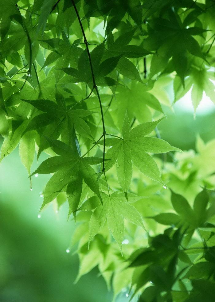 树林树叶图片-素彩图片大全