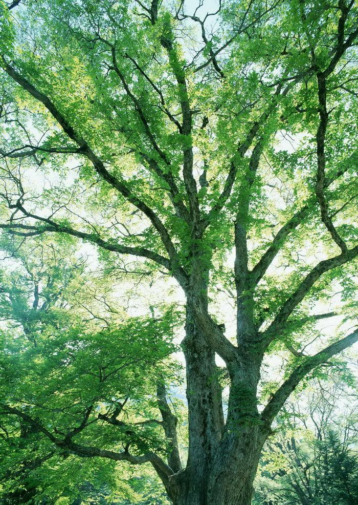 森林树木图片,森林树木,树林,植物,摄影,2094x2950像素