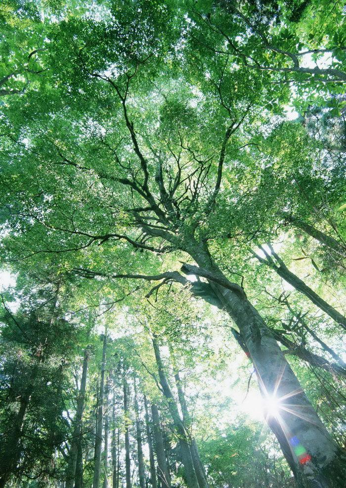 森林树木图片