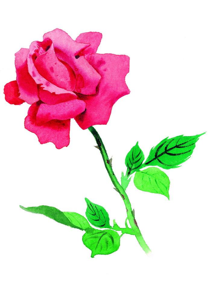 玫瑰水粉画图片,玫瑰水粉画,花朵,鲜花,摄影,植物,花卉,设计,2894x4