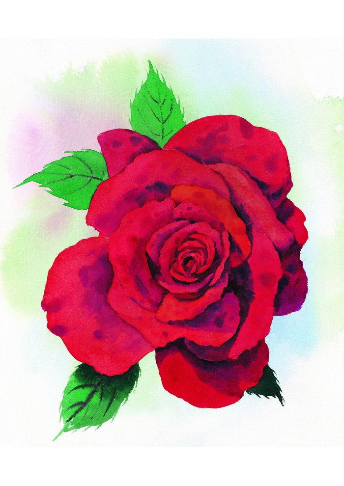 红玫瑰水粉画图片-素彩图片大全