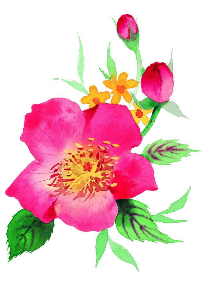 水粉花朵图片-素彩图片大全