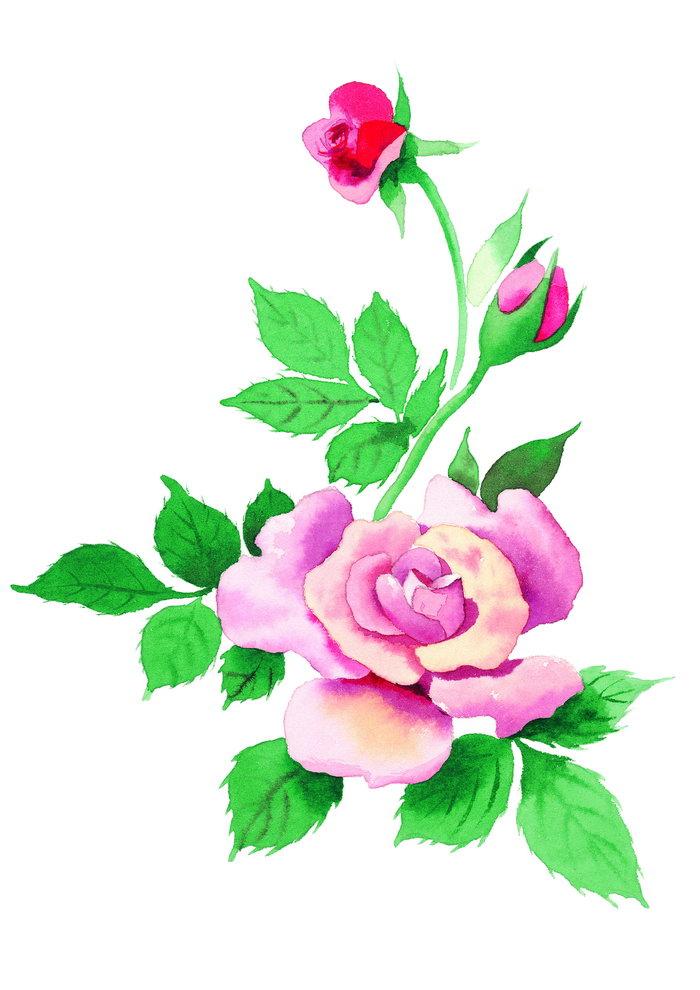 花朵水粉画图片,花朵水粉画,花朵,鲜花,摄影,植物,花卉,设计,2894x4