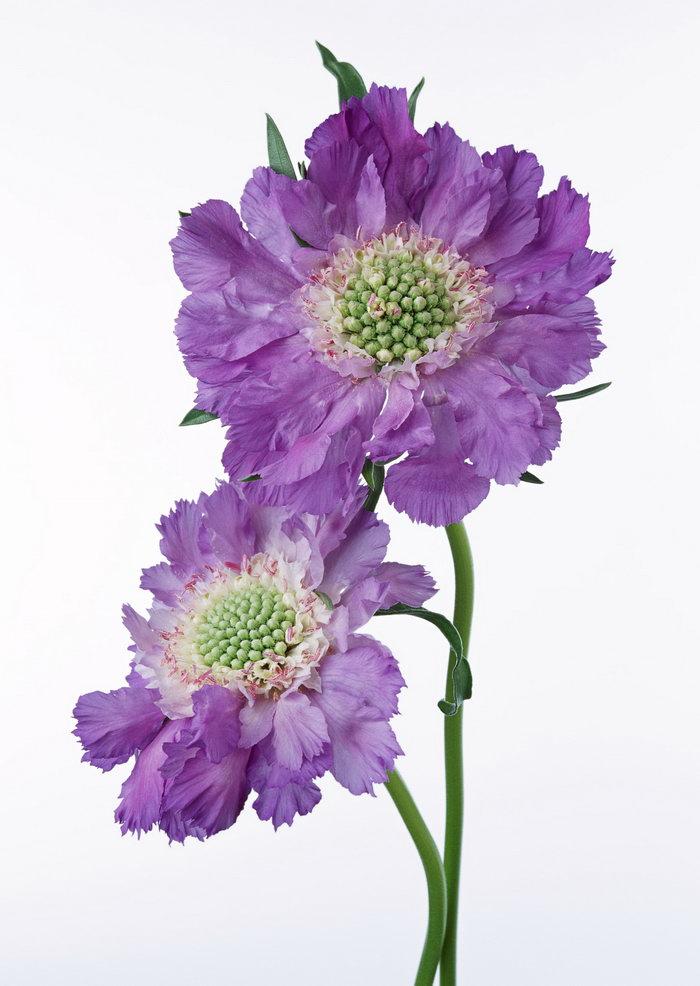紫色花图片-素彩图片大全