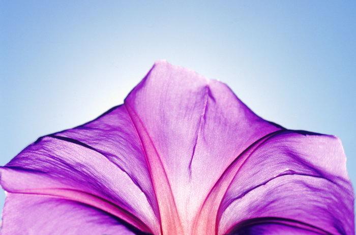 花朵大海风景风光图片