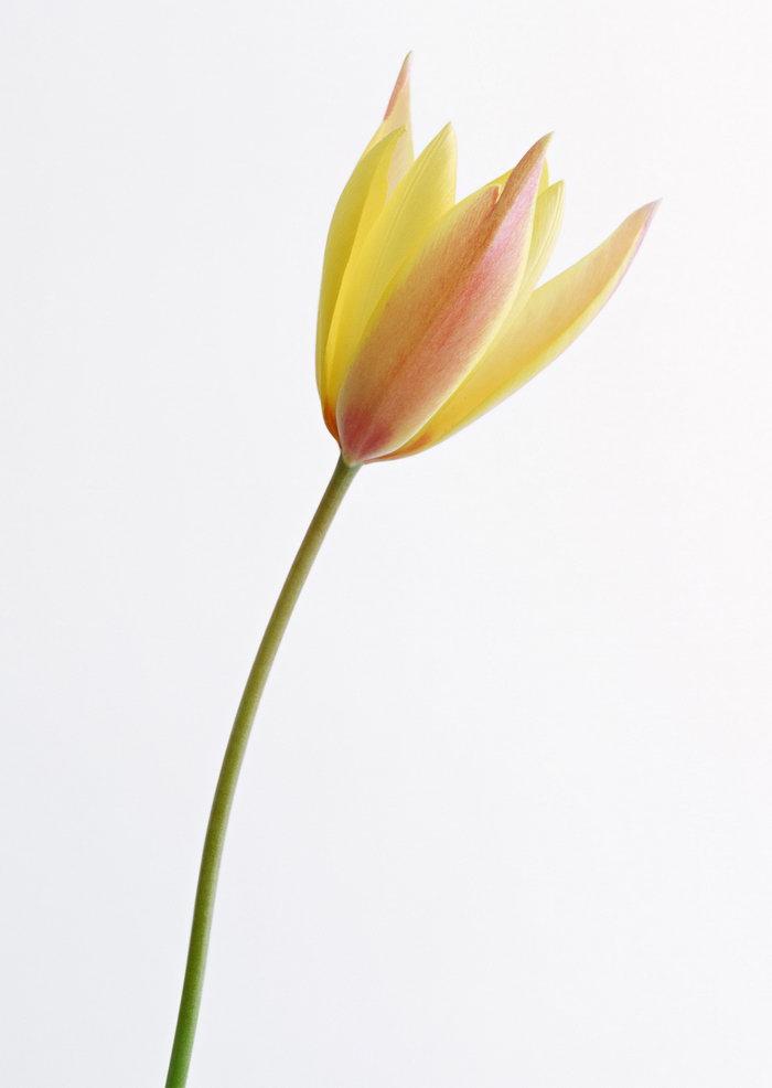 白兰花图片-素彩图片大全