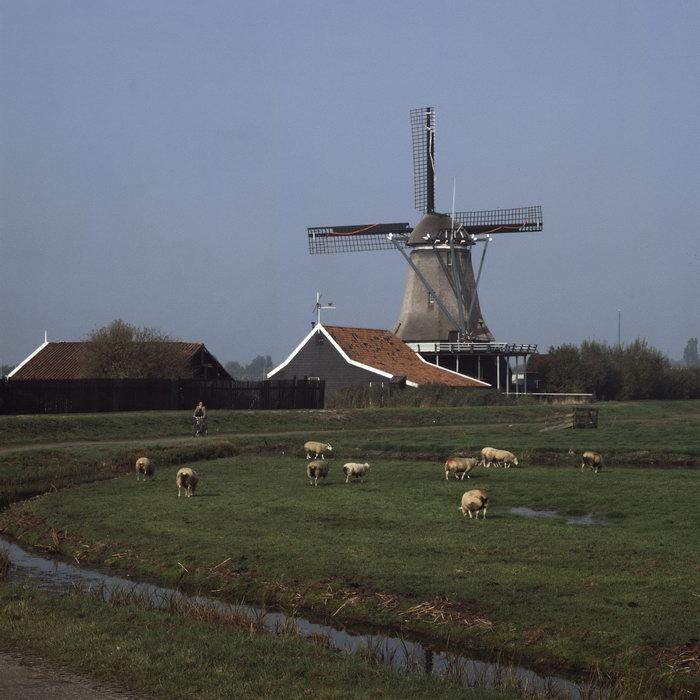 荷兰牧场图片,荷兰牧场,国外旅游风景,名胜景观,摄影,风景,2094x2950
