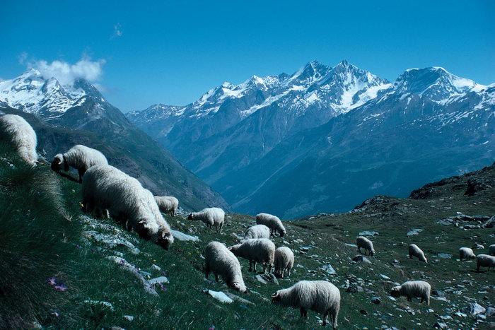 德国雪山图片,德国城市夜景,牧羊,德国风景,德国名胜,国外风景,风景