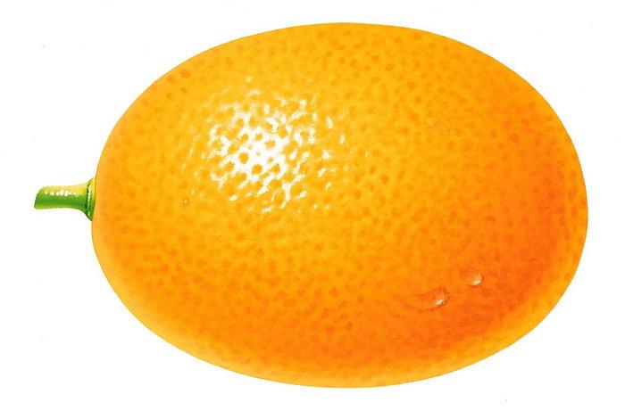 手绘橘子图片