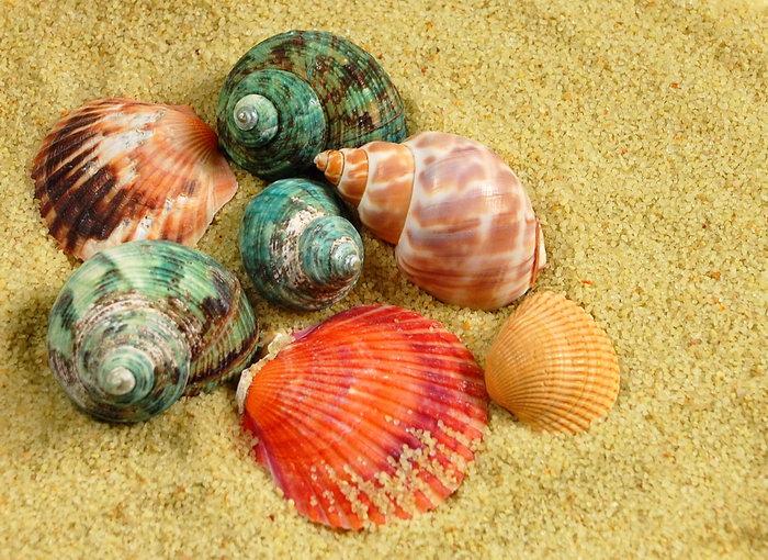 沙子海螺贝壳图片,沙子,海螺,贝壳,创意,摄影,创意设计,2471x1800像素
