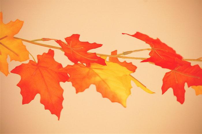 红枫叶图片,红枫叶,四季风景设计,风景,摄影,3008x2000像素