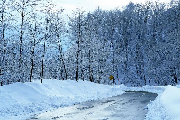 雪森林图片