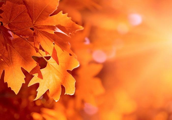 秋天枫叶图片,秋天枫叶,四季风景设计,风景,摄影,2433x1700像素