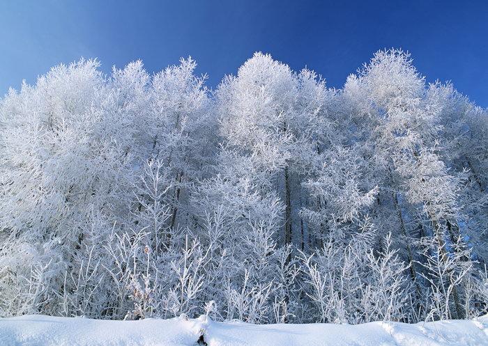 雪��/~���x+�x�&�7:d��_雪地雪树图片