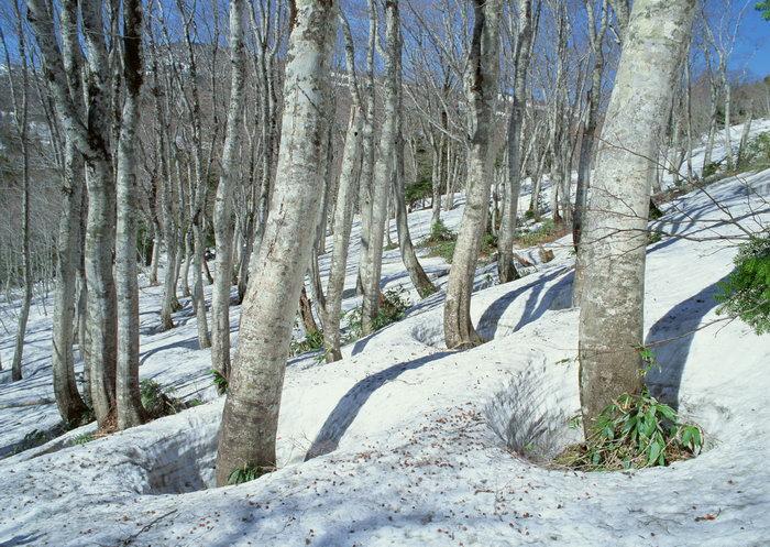 雪山森林图片,雪山,森林,自然美景,四季风景,2950x2094像素