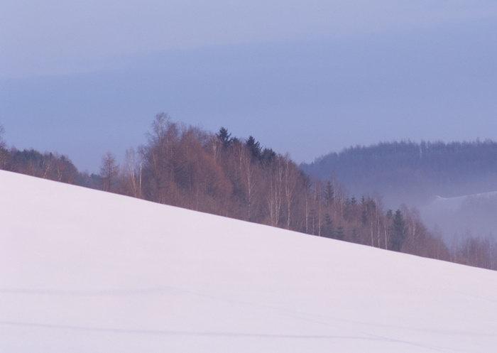 雪地树林图片