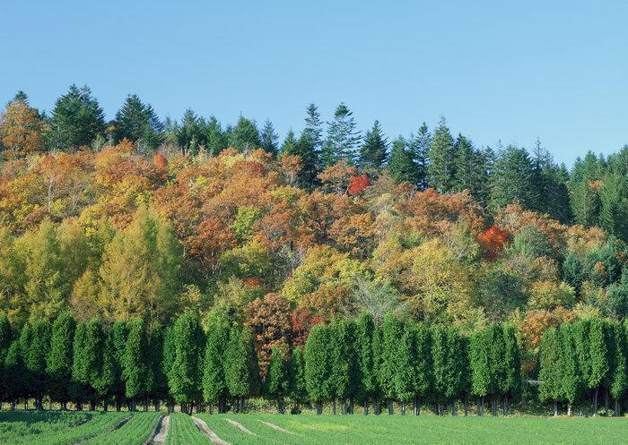秋天森林美景图片-素彩图片大全