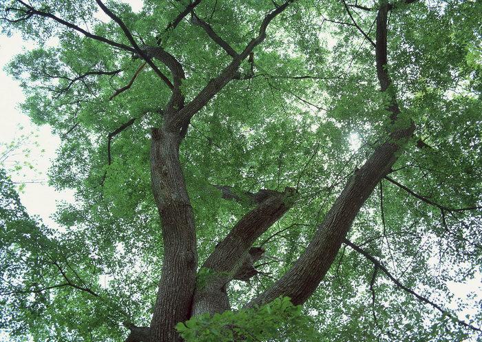 春天的树图片,春天的树,旅游风景,树木,树林,森林,四季风景,风景,2094