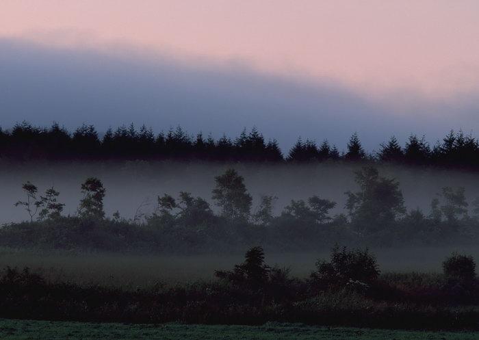 树林夕阳图片,晚霞树林,旅游风景,树木,树林,森林,四季风景,风景,2094