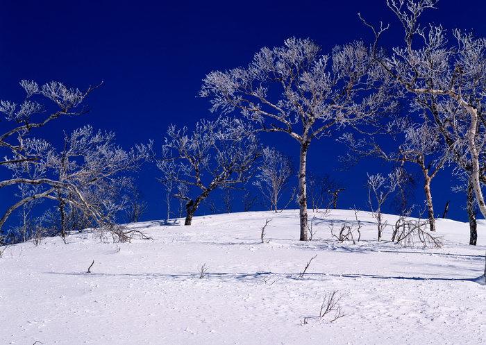 雪地树林图片,雪地树林,旅游风景,雪景,四季风景,风景,2094x2950像素