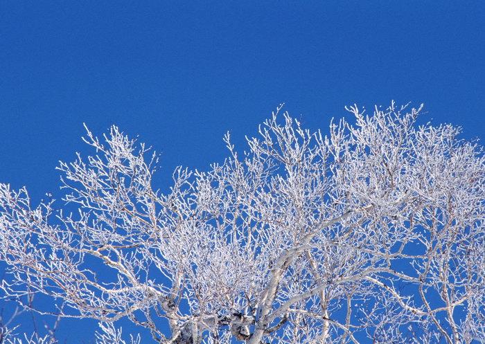 树枝上的雪图片,树枝上的雪,旅游风景,雪景,四季风景,风景,2094x2950