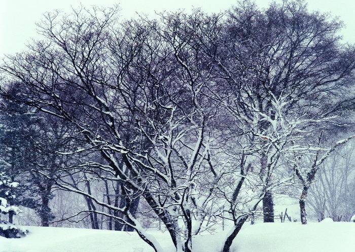 树林雪景图片,树林雪景,旅游风景,雪景,四季风景,风景,2094x2950像素