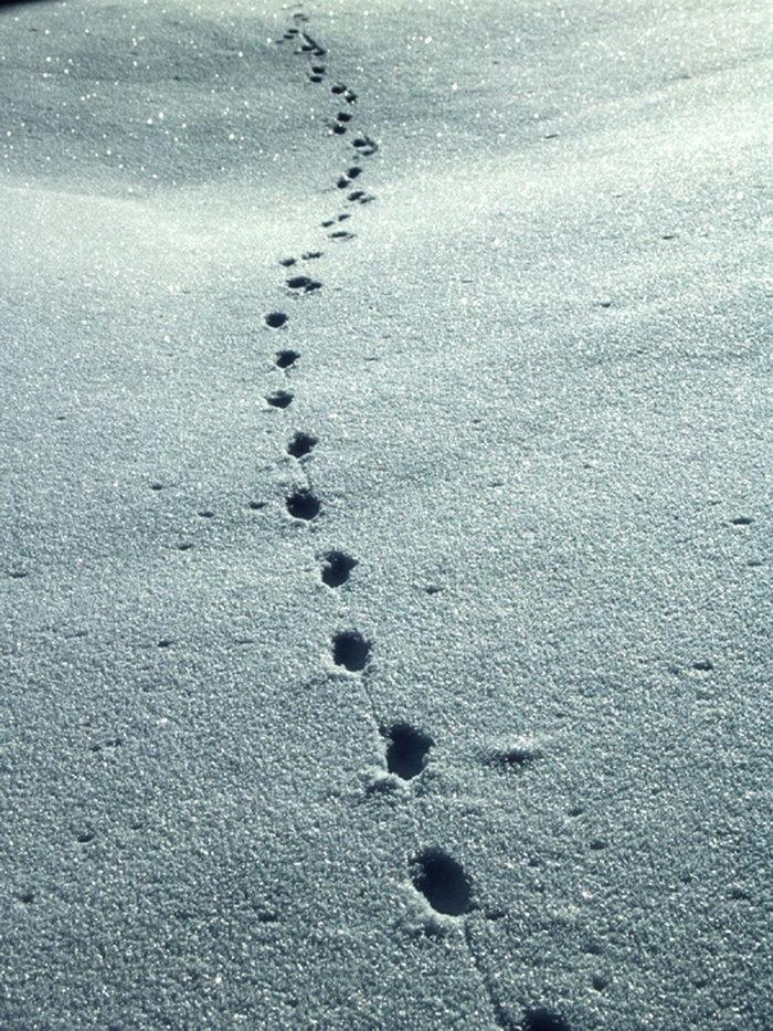 雪地里的脚印图片