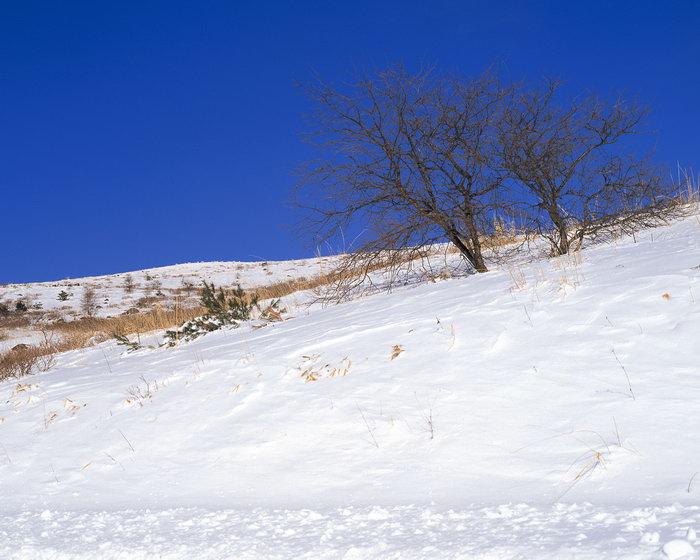 冬天雪的风景图片,冬天雪的风景,冬天风景,四季自然风景,2500x2000