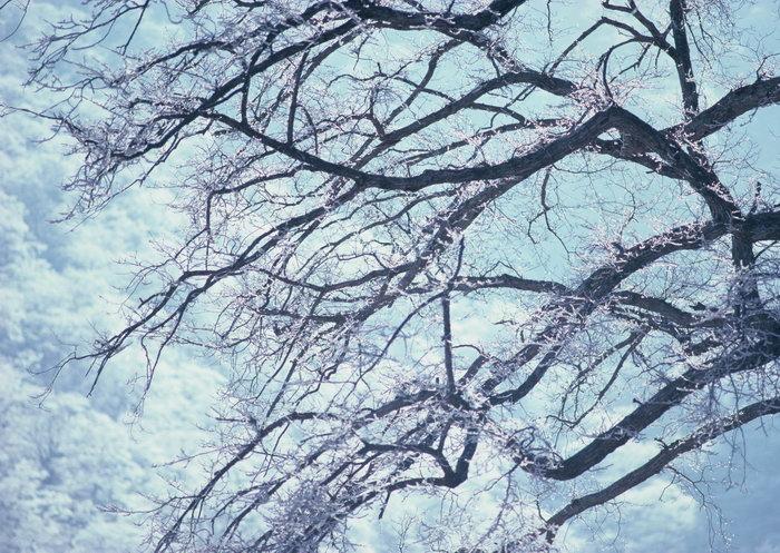 冬天雪景图片,美丽的冬天雪景,冬天风景,四季自然风景,2950x2094像素
