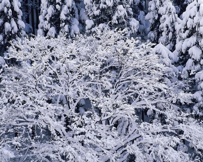 树林雪景图片