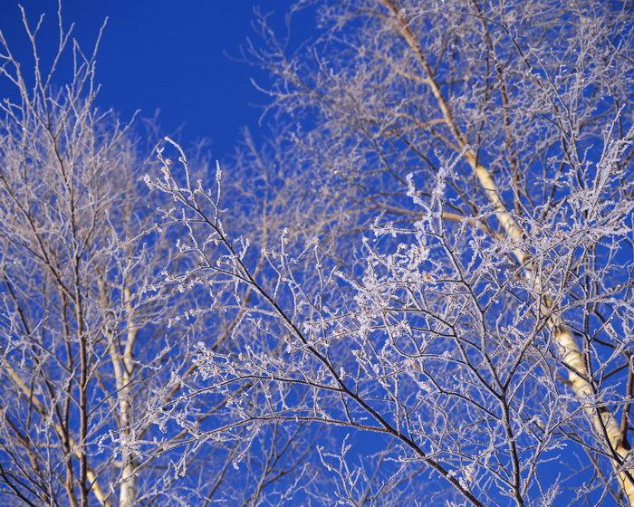冬天雪中树木图片-素彩图片大全