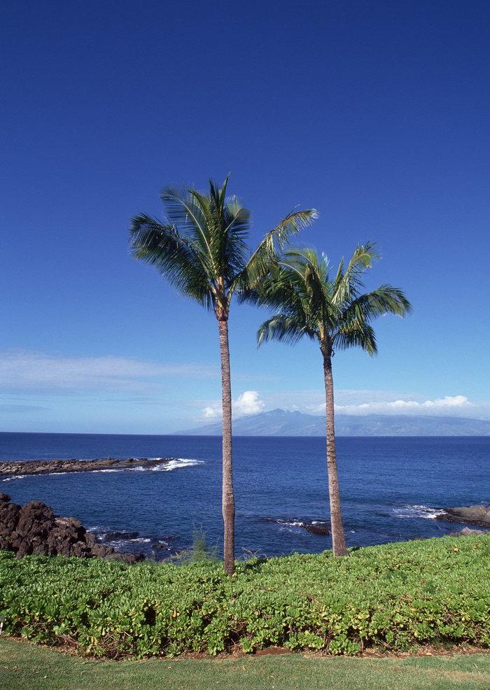 海滩椰树风景旅游风光摄影图片