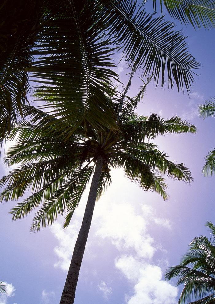 椰子树,旅游风光摄影图片,椰子树,马尔代夫旅游风景,名胜景观,摄影