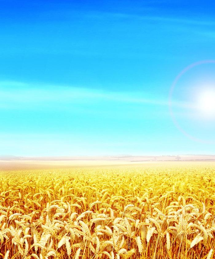金黄色的麦田图片,金黄色的麦田,田园风光,自然风景,摄影,5031x6048