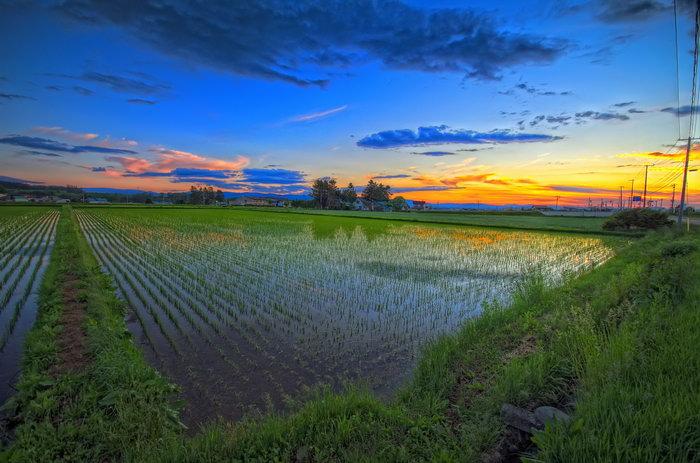 夕阳下的田野图片,夕阳下的田野,田园风光,自然风景,摄影,2048x1355