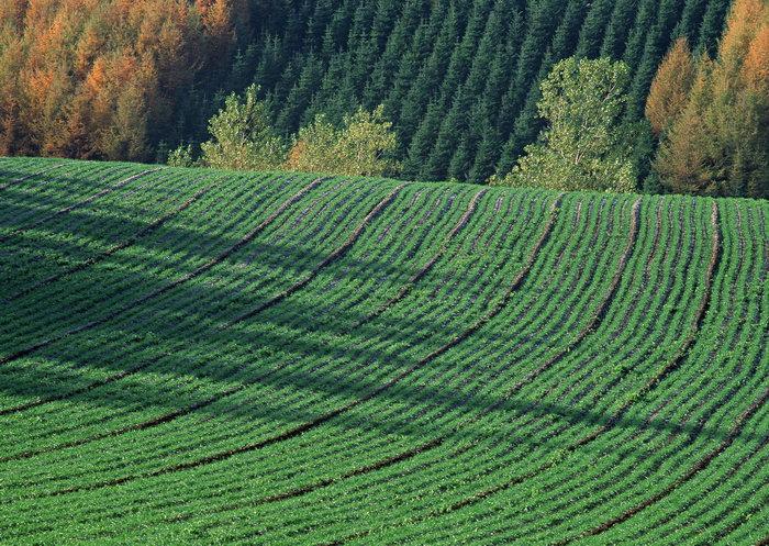 乡村田野图片,田野风景,自然美景,田园风光,2950x2094像素