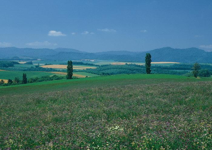 山坡花草图片,山坡花草,自然美景,风景,2950x2094像素