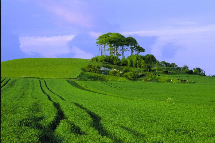 绿色的田野图片