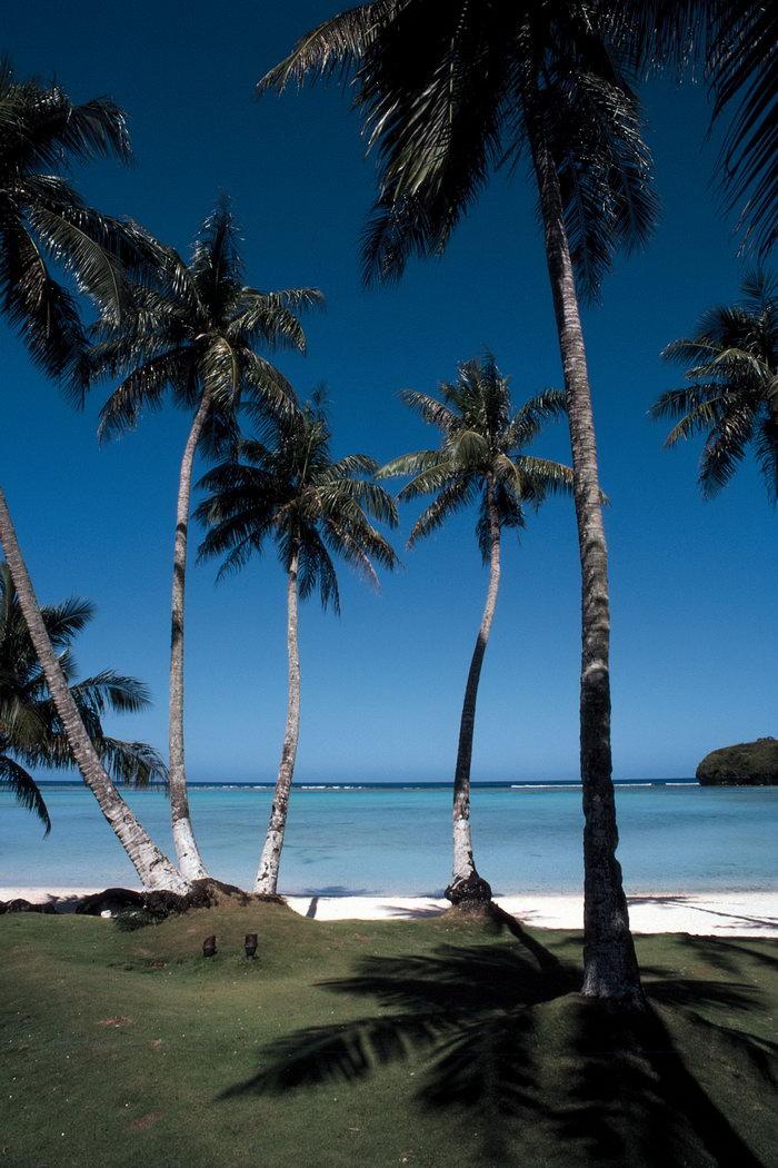 夏威夷椰树大海风景风光图片