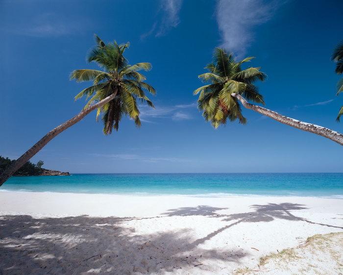 椰树沙滩大海大海风景风光图片