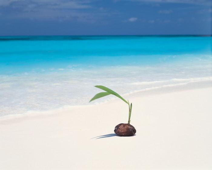 白色海滩蓝色大海大海风景风光图片